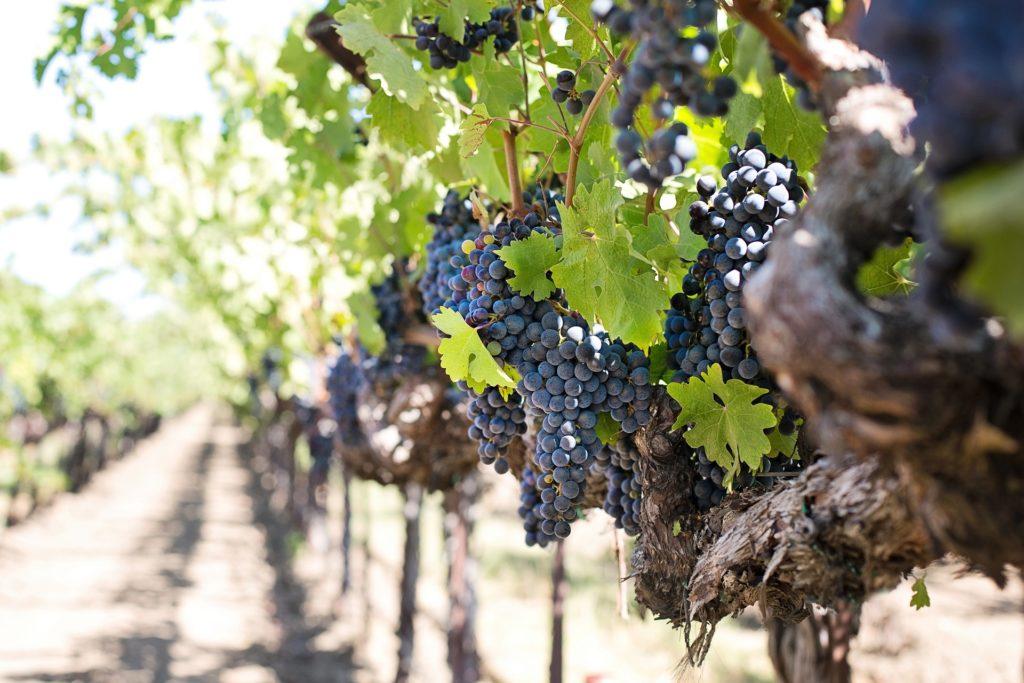 Вино в Испании