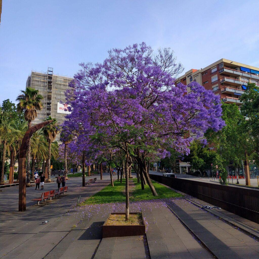 погода в Барслеоне весной
