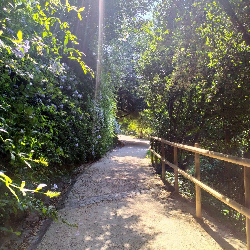 ботанический сад в Барселоне