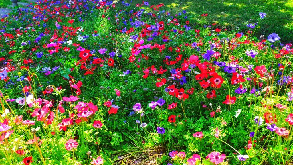 Барселона сады