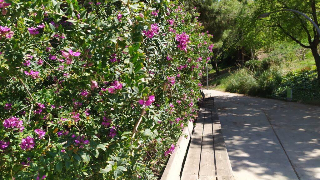 Сады Джоан Бросса в Барселоне