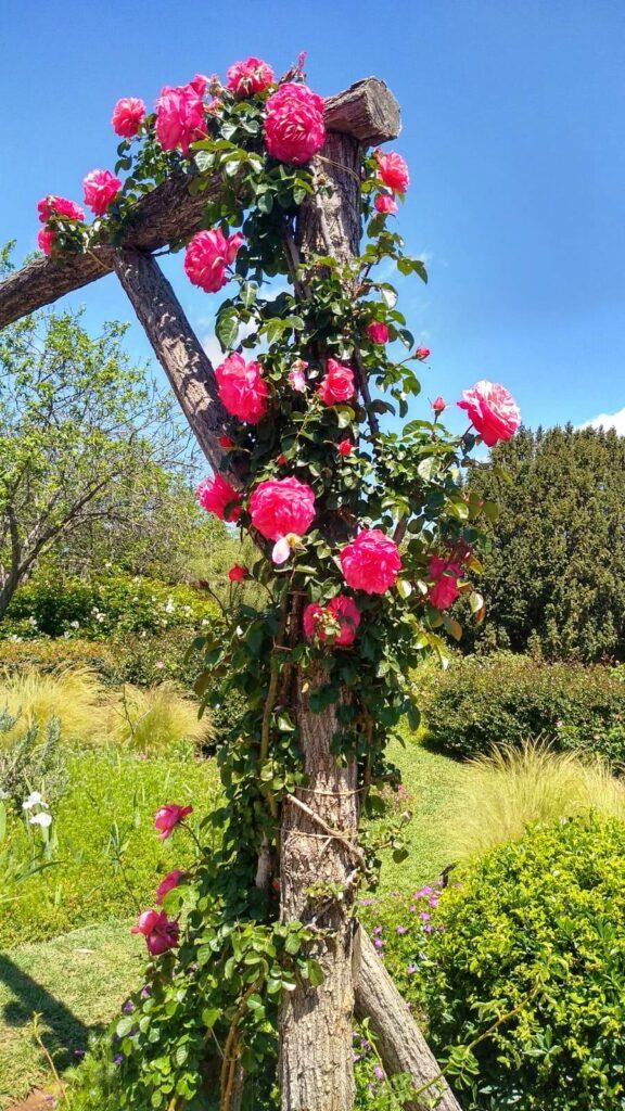 Парк роз в Барселоне
