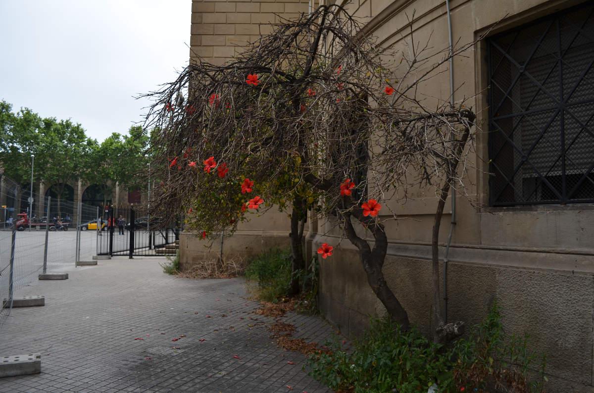 Цветок в Барселоне