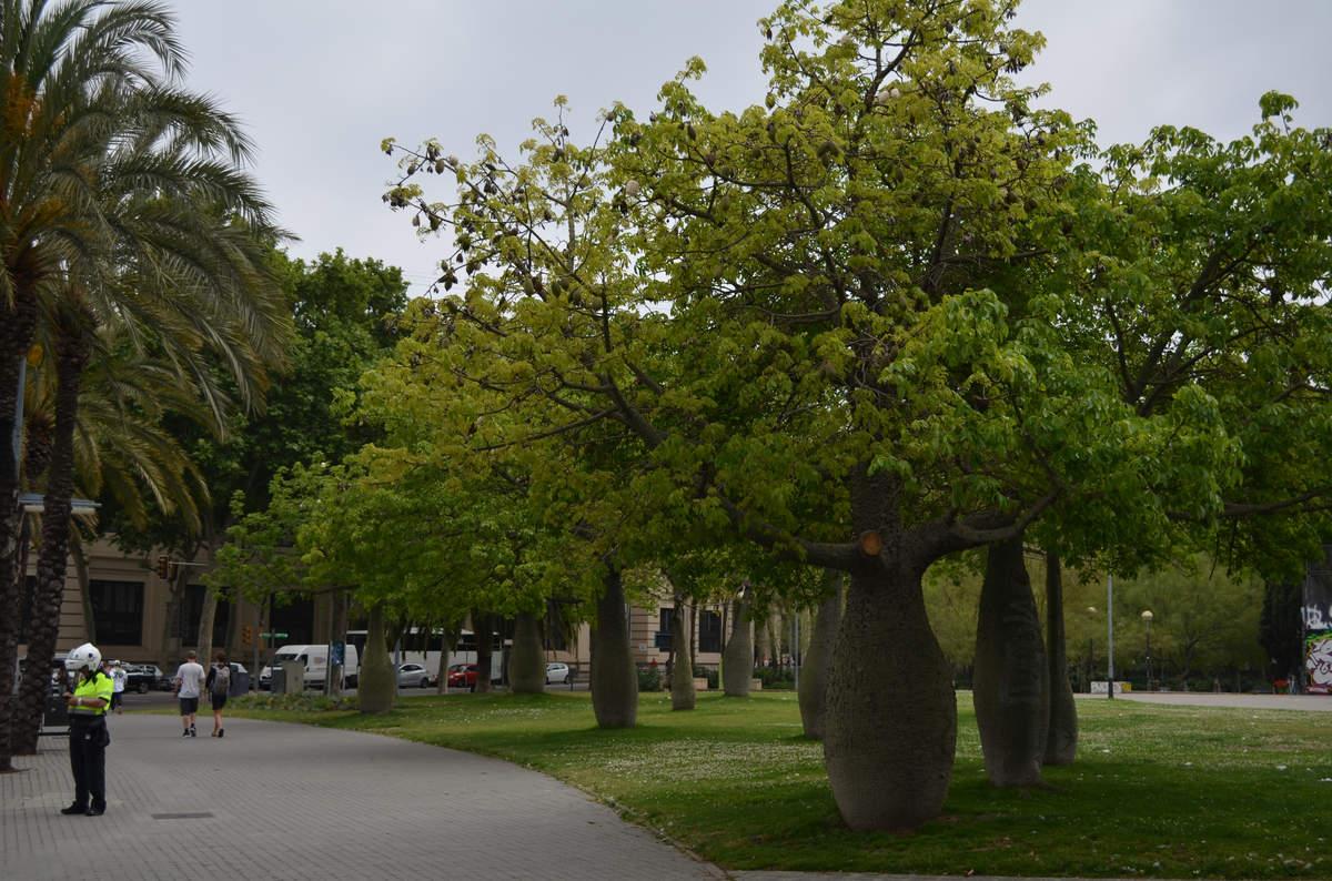 Дерево бутылка. Барселона